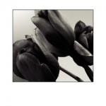 tulips bw g018