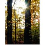 sunlight forest g026