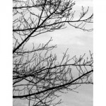 frozen tree g027