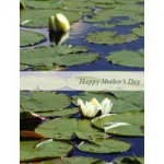 water lilies m002